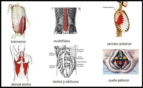 musculos que se trabajan en los hipopresivos