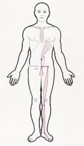 canal tendinomuscular de bazo