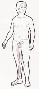 canal tendinomuscular de higado