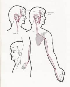 canal tendinomuscular de intestino delgado