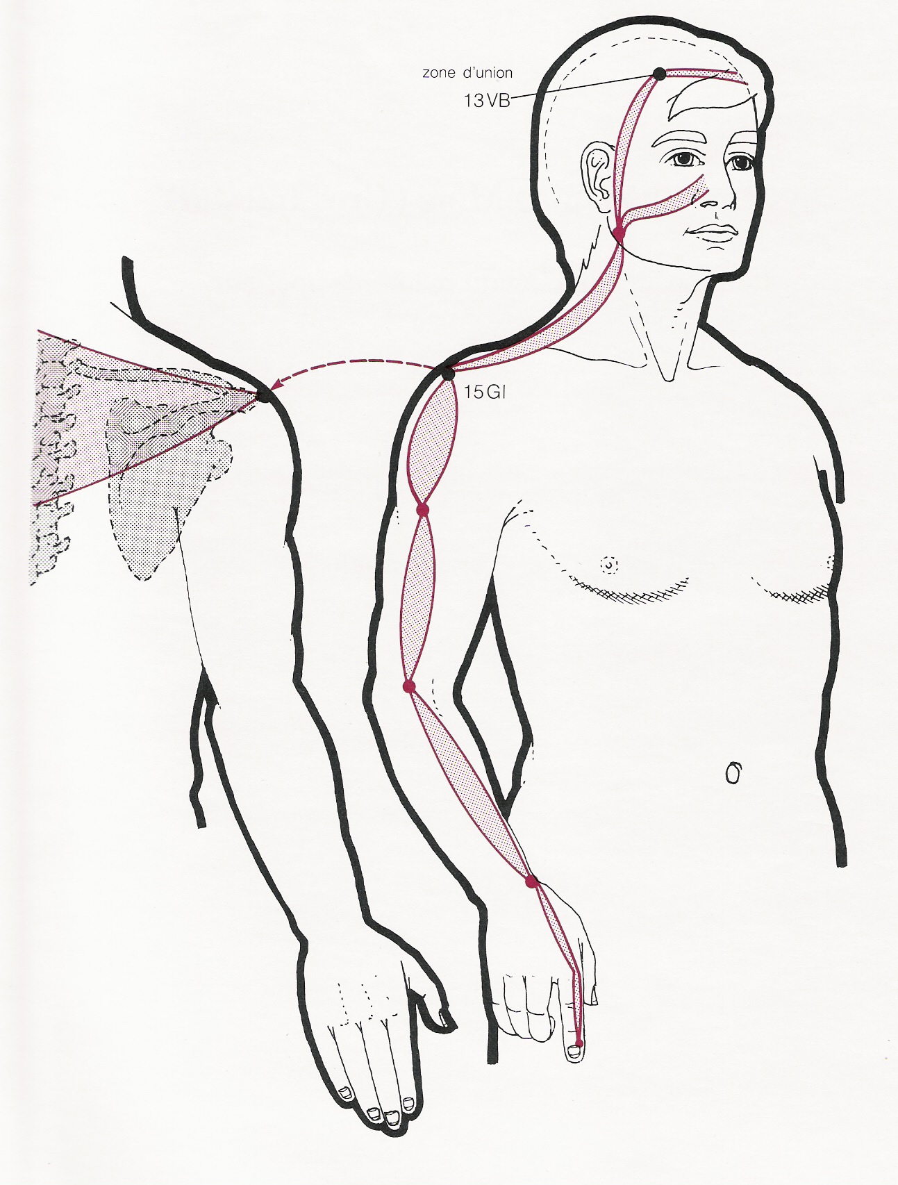 ¿Sabes que son los meridianos tendinomusculares?