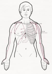 canal tendinomuscular de pulmon